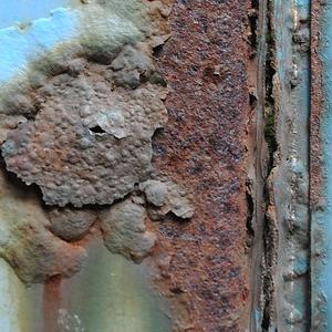 rost